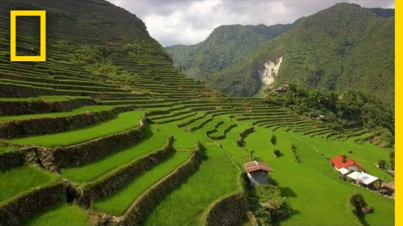 Soar Over the Lush Rice Terraces of the Philippines National Geographic