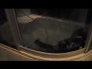 Мучение кота