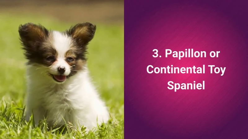 Top 10 Cutest Dog Breeds In The World - 2019
