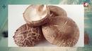 Китайские грибы шиитаке в Кричеве БЕЛАРУСЬ 4 Могилев