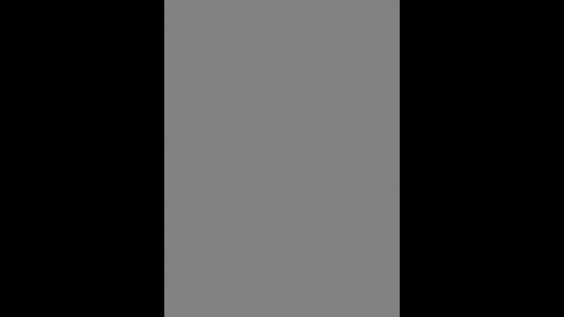 шиншиллы