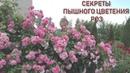 Секреты пышного цветения роз. Лектор - Иващенко Елена Анатольевна, цветовод