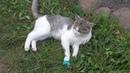 кот Саймон потерял коготь. Мы лечили котика