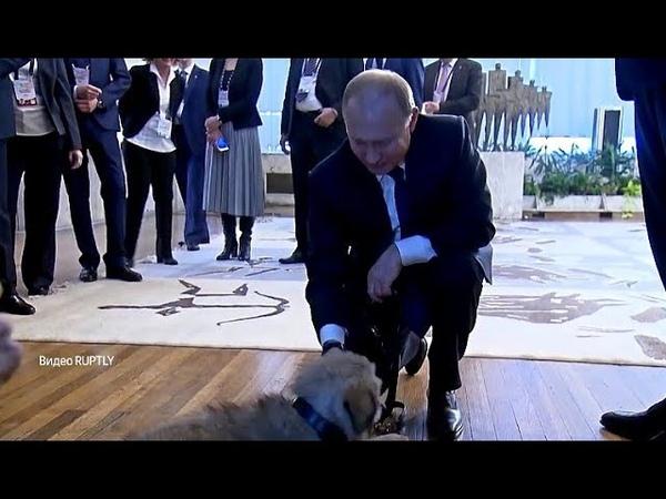 Премьер-министр Сербии подарил Путину щенка шарпланинской овчарки