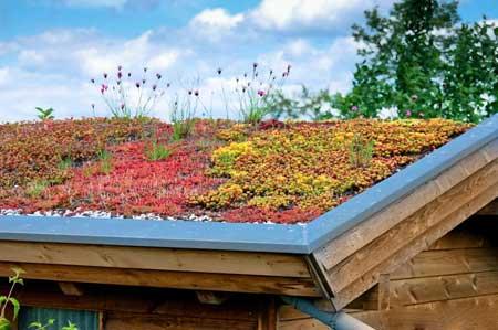 Экологические крыши, которые изолируют, а также уменьшают количество непроницаемой поверхности, являются одним из примеров зеленой строительной техники