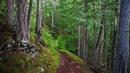Картинка природа Узкая тропинка в лесу Bild natur Smal stig i skogen