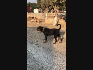 Патриция - сука из Кипра
