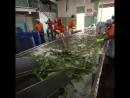 Aloe vera company