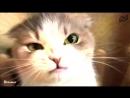 Dank cats [ CINELUX ]