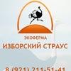 Экоферма Изборский Страус Официальная группа!!!