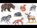 Звуки животных. Как говорят лесные животные для маленьких детей. Развивающее видео.