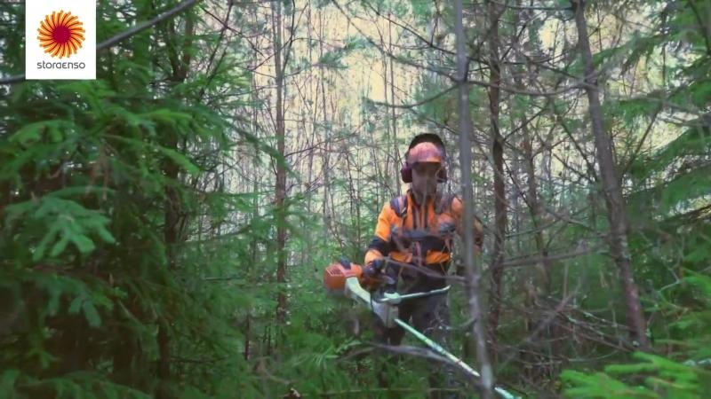 Реконструкцию молодого леса. Финляндия.