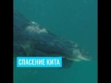 Малыш кит запутался в сетях