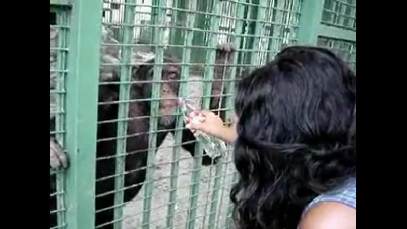 блять батя в обезьянике,мама,он опять обмазывался дерьмом и кричал