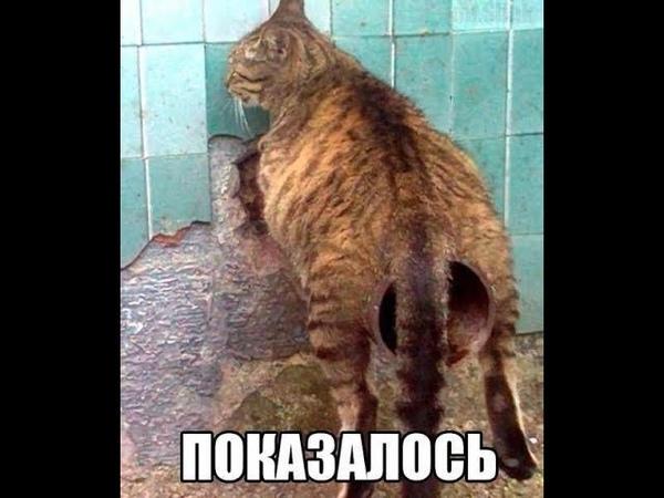 лютые приколы интернета,кот насрал в стакан