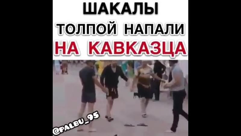 Шакалы толпой напали на кавказца mp4