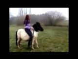 riding backwards on your stubborn pony