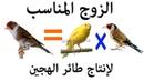 كيف أختار الزوج المناسب لإنتاج هجين طائر ا 1