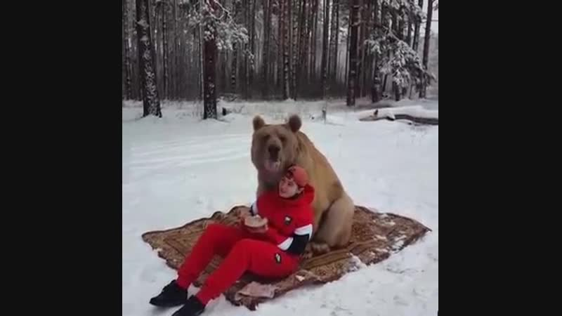 Beware, It's a Hungry Bear! Grizzly Chills on Blanket During Relaxing Picnic