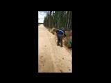 В Якутии пустились на поиски медведя с канистрой на голове