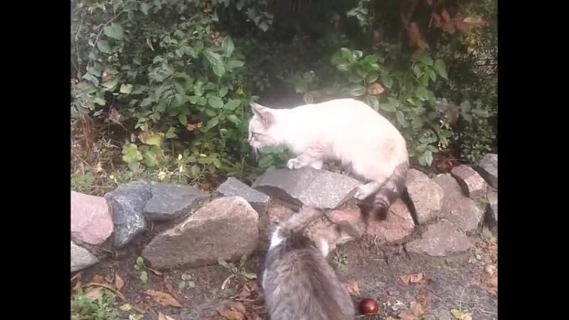 Дачные котятки 6