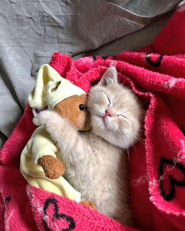 Сладких снов котятки картинки