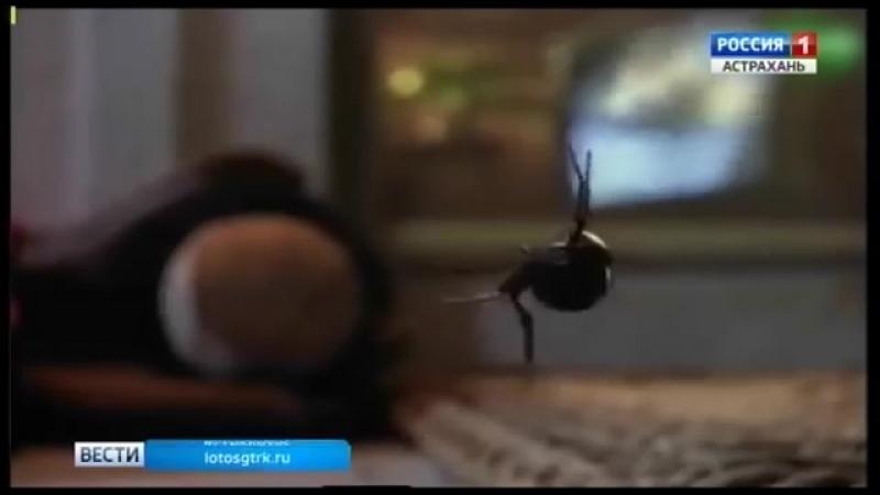 про паука в Астрахани!