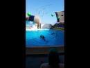 Дельфины в вальсе🦈🐬