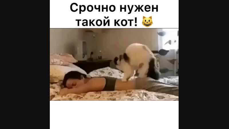 Срочно нужен кот!