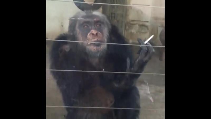 обезьяна оценивает😂😂