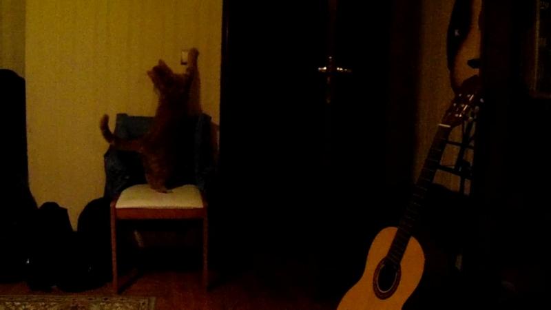 Кот включает свет в комнате(22.09.2018)