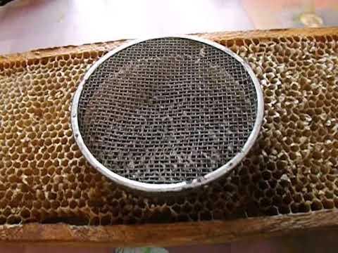 ошибки пчеловода - подсадка маток - часть 2 - сетчатый колпачок