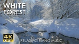 4K White Forest - Relaxing Piano Music &amp River Sounds - Snowy Winter Nature Video - Ultra HD