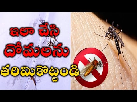 How To Kill Mosquitos with Lowcost 100% Natural Mosquito Repellent INFINITE VIEW