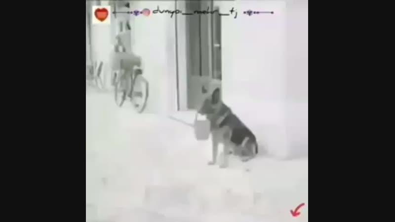 Bozbash_videolarBsUwvLTBaUQ.mp4