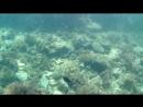 Крымское море Stilidea 04