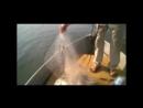 Рыболовная чудо-сеть Findfish