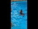 С дельфинами Атлеш