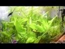 Аквариум Рыбки Гуппи Моллинезия Лимия чернополосая Новые рыбки