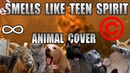 Nirvana - Smells Like Teen Spirit (Animal Cover) [REUPLOAD]