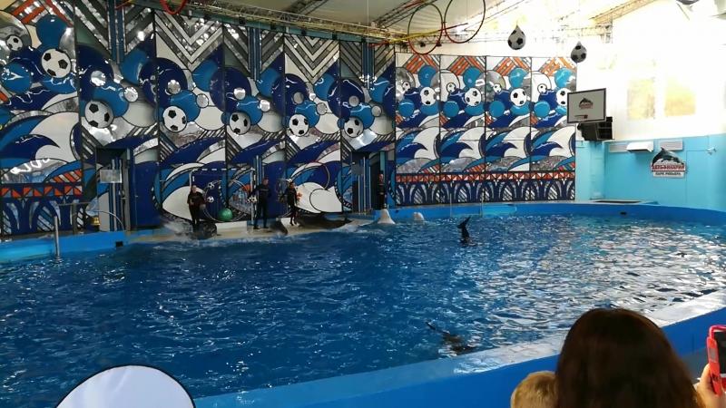 парк Ривьера Сочи дельфинарий