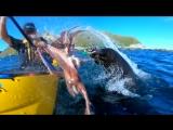 Брутальный морской котик дал каякеру пощечину осьминогом