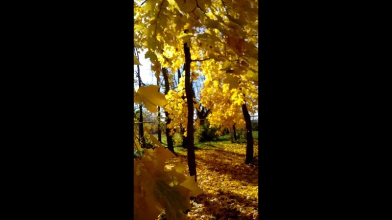 Моя любимая рыжая осень Моя любимая рыжая осень