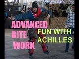 Advanced attack pitbull training achilles bulletproof pit bulls bite k9 pitbulls