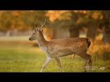 VLADIMIR COSMA - Les fugitifs-pesnia--muzyca--covo--scscscrp