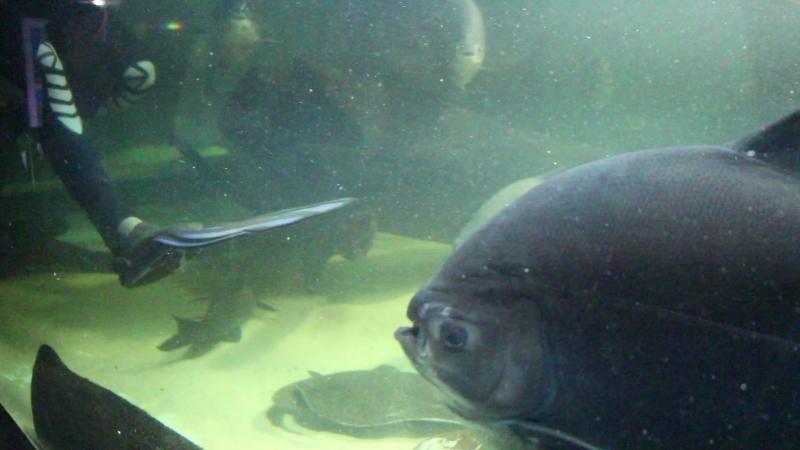 Кормление рыб в Океанариуме г. Пензы