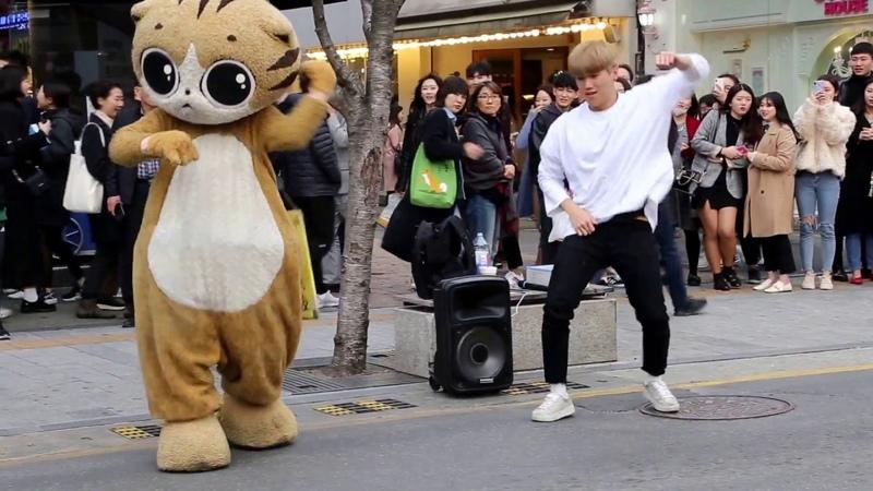 JHKTV] 신촌명물고양이 shin chon special cat k pop dance dancer (박준학)bang bang bang