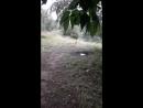 Прячусь от дождя под деревом и тут вдруг утка с утятами тоже решила спрятаться от дождя под этим же деревом)