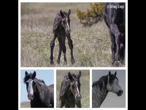 2019 Filly out of Mare Domino x Stallion Arrowhead
