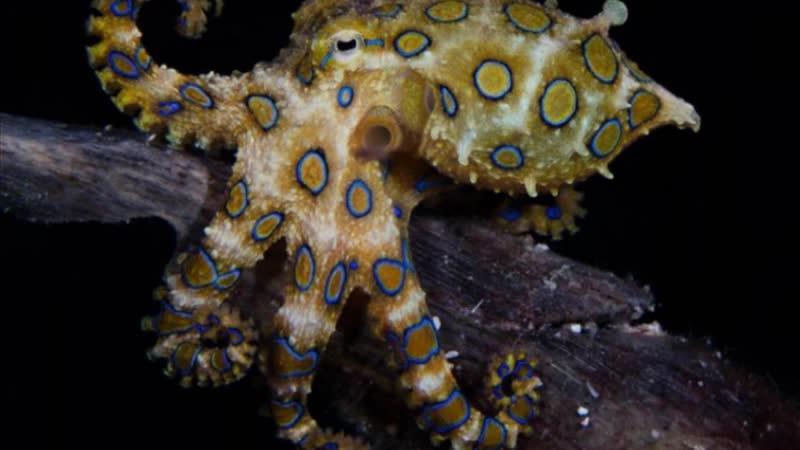 Конкурс подводной фотографии